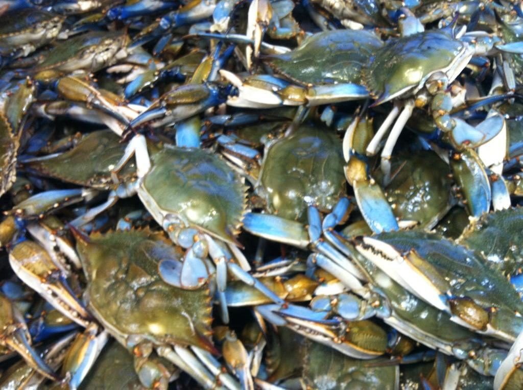 Fresh seafood daily captain white seafood captain white for Wholesale fish market near me